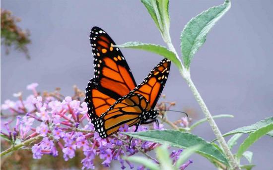 соли минеральных веществ, серьезные вредители, что едят бабочки